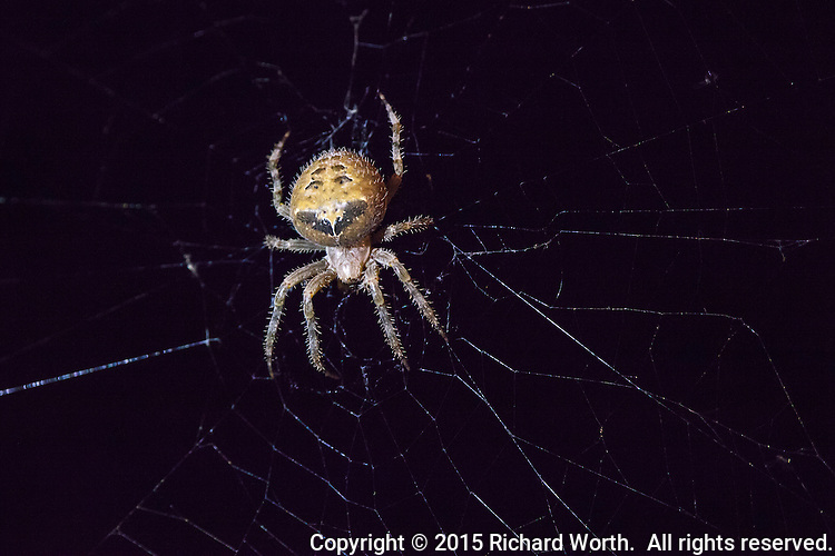A web next to a front door that was empty earlier in the day is occupied at night.