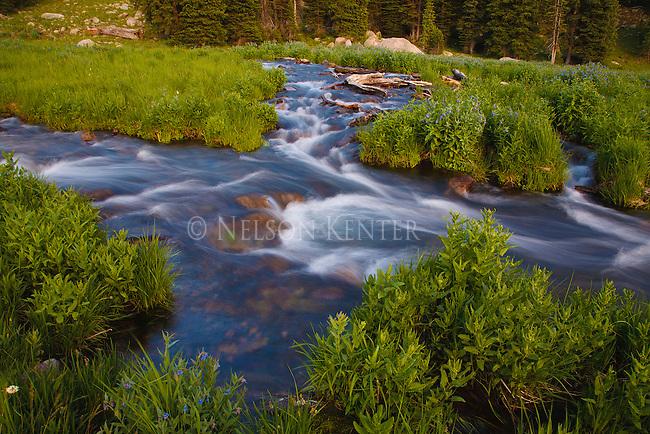 A mountain stream in the Absaroka Beartooth wilderness below Hidden Lake