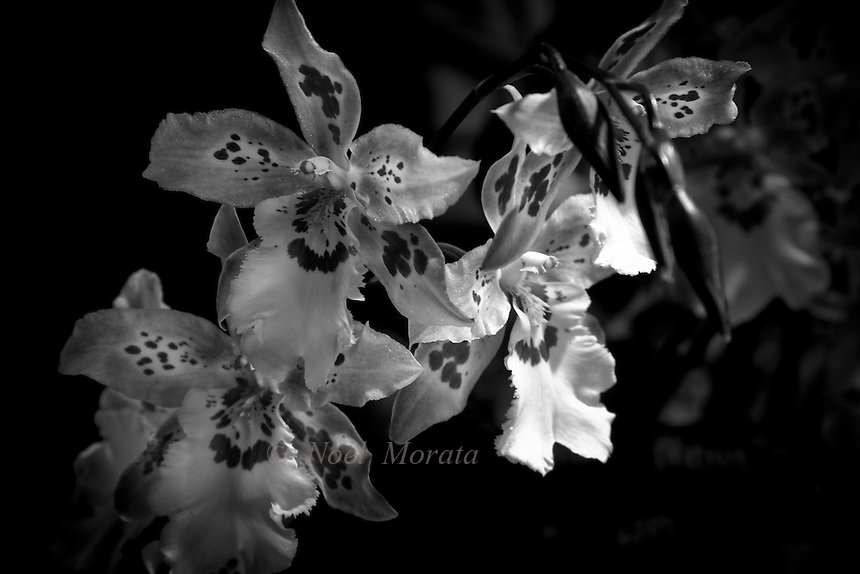 Floral studies in black and white