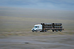 Loaded semi truck and trailer on US Highway 95, Mineral County, Nevada, morning.