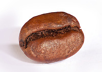 Single Coffee Bean front view