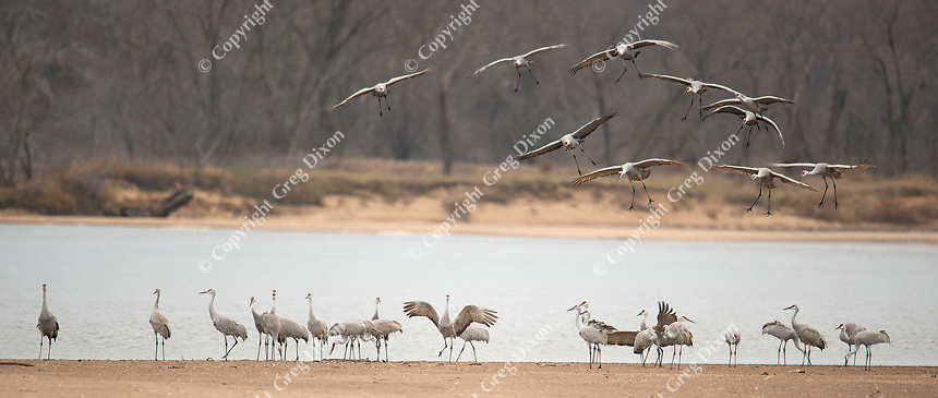 Sandhill Crane Migration Day 1, Aldo Leopold Foundation,  Fall/Winter 2016 | Photos by Greg Dixon