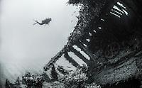 Underwater Nature
