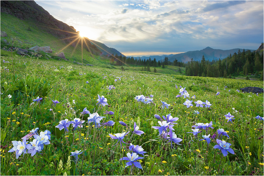 The hike to Lower Lakes Basin is an easy 2.5 miles that travels ~ 1600 vertical feet. After you reach the basin, the wildflowers fill the Colorado landscape. In this case, Columbine, the state wildflower, were plentiful. <br /> <br /> I had rolled out of bed at 3:45am to make the drive from Ouray to the Ice Lakes Trail head, which lies approximately 5 miles down a good dirt road. I was on the trail by 4:45am in order to make it to this point for sunrise. After this stop, I kept hiking up the the aquamarine lake, Island Lake, that is nestled in a cirque another 2 miles and 1000 feet up. It was well worth the effort, too. Since I left early, I had both the Lower and Upper Lake Basins to myself, only seeing other folks on my way down. And there were a lot of people hiking up.<br /> <br /> The trek to Ice Lakes is well worth the effort anytime, but is particularly spectacular in late July and August when the Colorado wildflowers are blooming.