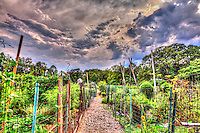 HDR view of the Newark Street Community Garden in Washington, DC after a summer storm.