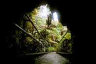 Thurston Lava Tube (Nahuku), Hawaii Volcanoes National Park, Kilauea, Big Island, Hawaii