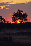 Sunset, Hwange Natl. Park