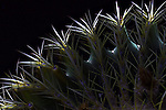 Light painting with a single LED light of a golden barrel cactus.