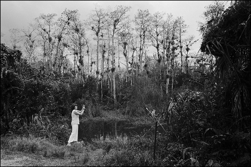 In the Everglades<br /> From &quot;In the Wild&quot; series. Loop road, Everglades, FL, 2008