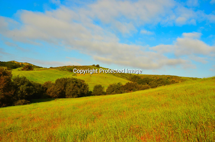 Fine art photograph of Early Morning Meadow
