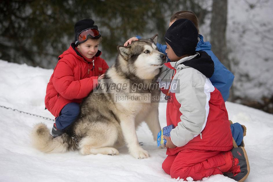 Europe/France/Rhone-Alpes/74/Haute-Savoie/Megève: lnitiation à la randonnée en traineau à chiens par Bruno au hameau du Mont du Villard