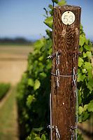 Methven Family Vineyards block 53