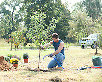 male gardener watering a newly planted tree