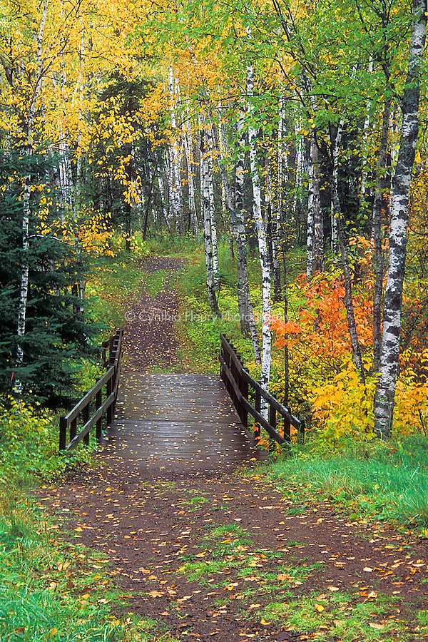 Path in Woods- Split Rock Lighthouse SP, fall color, rainy path.tif ...