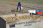 Foto: VidiPhoto<br /> <br /> BEILEN &ndash; Jantien Borger-Wolfs van landbouwkundig onderzoeks- en adviesbureau HLB De Groene Vlieg, neemt donderdag grondmonsters op een bollenperceel van lelieteler Martin Hilberts uit Beilen in Drenthe. Voordat de miljoenen leliebollen vanaf half maart de grond in gaan, wordt eerst de bodemgesteldheid gecontroleerd op ziekten. Met name het wortellesieaaltje kan grote schade veroorzaken aan de wortels van de leliebollen. Hilberts is met 60 ha. lelies een grote lelieteler in Nederland. Drenthe is uitgegroeid tot een van de belangrijkste productiegebieden van lelies. Om zo min mogelijk gewasbeschermingsmiddelen te gebruiken, plant de Drentse bloembollenkweker slechts eenmaal in de zes jaar lelies op hetzelfde perceel. Indien er toch veel wortellesieaaltjes in de bodem worden aangetroffen, wordt er biologische bestrijding ingezet door het planten van afrikaantjes. Deze plantjes zorgen er op natuurlijke wijze voor dat de schadelijke aaltjes worden ge&euml;limineerd. De exportwaarde van de Nederlandse leliesector, die werk biedt aan zo&rsquo;n 4500 mensen, bedraagt ongeveer 250 miljoen euro per jaar. Buitenlandse afnemers eisen 100 procent aaltjesvrije leliebollen.