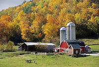 Pownal Center, Vermont.Bright autumn color surrounds this idyllic farm..(not released)