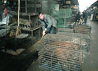 A worker cleans excrement from cages at Guangzhou's largest animal market. Cages animals are still being sold at the market despite reports the government had ordered its closure. Green cages at rear were emptied of civet cats by government authorities the previous day. SARS is easily transmitted in animal faeces. <br /> 06-JAN-04
