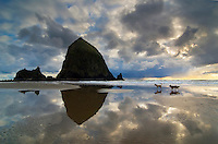 Dogs running on Cannon Beach in Oregon with storm clouds overhead. Cannon Beach is recognized by its well-known landmark, Haystack Rock. This igneous rock has an elevation of 235 feet.