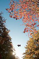 Fall color near Munising Michigan.