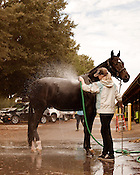 October 4, 2012. Raleigh, North Carolina.. Lizzie Roberts, of Chesapeake, VA, washes Phantom Fury.. The 2012 Hunter and Jumper Horse Show was held October 3-7 at the NC State Fair grounds, with hundreds of participants traveling from far and wide to compete.