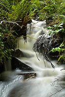A small forest stream, Rogaland, Norway.