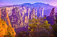 The Front Garden, rock pinnacles in Zhangjiajie National Forest Park, People's Republic of China, Wulingyuan National Park, UNESCO World Heritage Site, rock formations of quartz-sandstone