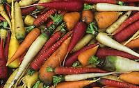 Genetic variation and diversity in Carrots ,Daucus carota,.