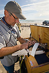 Scientists from the Peregrine Fund collecting information about endangered peregrine falcons by trapping, weighing, banding, measuring and looking at blood samples on South Padre Island, Texas, autumn.