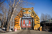 Large tiger sculptures decorate the entrance to the Siberian Tiger Park in Haerbin, Heilongjiang Province, China.  The Siberian Tiger Park is described as a preserve to protect Siberian tigers from extinction through captive breeding.  Visitors to the park can purchase live chickens and other meat to throw to the tigers.  The Siberian tiger is also known as the Manchurian tiger.