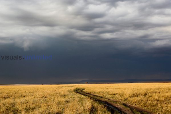 Storm clouds and a winding dirt road across the grassy savanna of the Masai Mara Game Reserve, Kenya, Africa