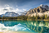 Cowfoot Mountain, Bow Crow Peak and Bow Peak reflection in the calm waters of Bow Lake in Banff National Park. The green of the water is from the glacial flour scoured from the mountain from Crowfoot Glacier above.   The Icefields Parkway has an embarrassment of riches like this between Lake Louise and Jasper.