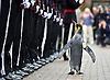 World Famous King Penguin Honoured