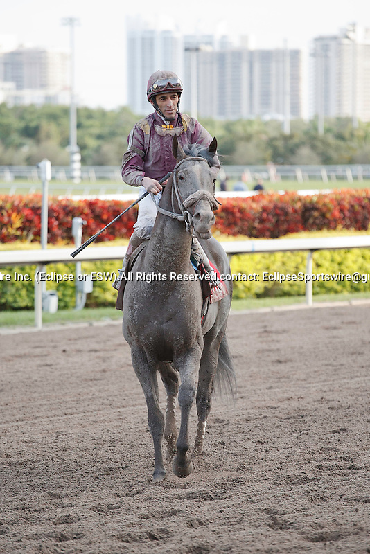 Jackson Bend with John Velazquez after winning the Hals Hope(G3) at Gulfstream Park. Hallandale Beach, Florida. 01-14-2012
