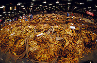 Tobacco in a Danville, Virginia warehouse, ready for sale at auction. Danville Virginia USA.