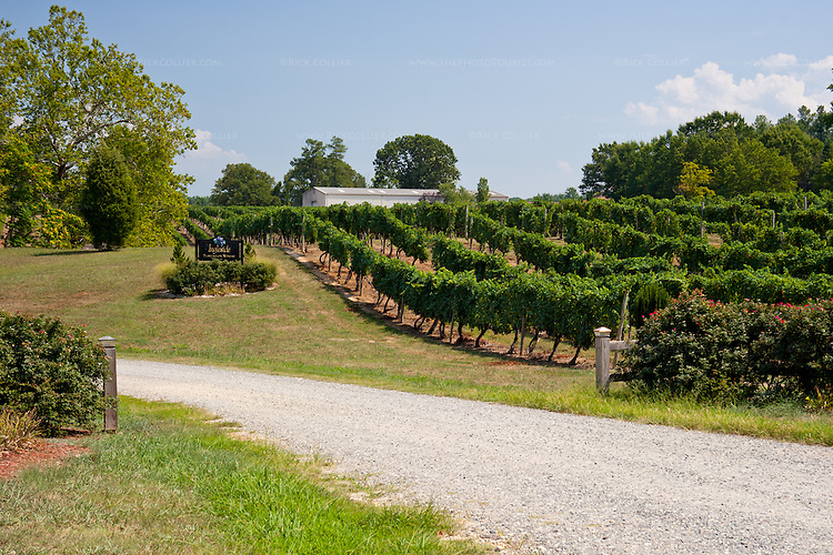 The gravel driveway into Ingleside Plantation Winery winds into the grounds past the sign and several vineyards to the parking area.