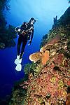 Diver, Bahamas