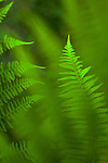 Forest setting with close-ups of ferns
