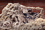 Cleaning and seperating piles of alpaca wool at an alpaca wool factory in El Alto, Bolivia.