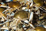 Washington DC; USA: Blue crabs from the Chesapeake at the Maine Avenue Fish Market.Photo copyright Lee Foster Photo # 26-washdc82726