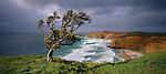 Windswept tree at Kahunene. Chatham Islands. New Zealand.