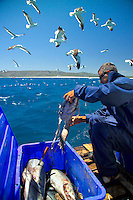 GANSBAAI, SOUTH AFRICA, DECEMBER 2004. Ger, one of the crew prepares the Tuna heads for bait. Brian Mc Farlane organises Great White Shark cage diving tours out of Gansbaai. Gansbaai is one of the best places in the world to see the Great white in its natural habitat. Photo by Frits Meyst/Adventure4ever.com