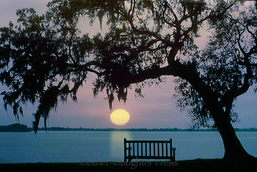 Bench under tree on the bayou