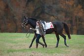 Pennsylvania Hunt Cup Races - 11/01/2015