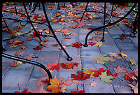 Charlottesville, Va. fall leaves