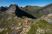 Female hiker climbing ridge towards summit of Nonstind mountain peak, Moskenesøy, Lofoten Islands, Norway