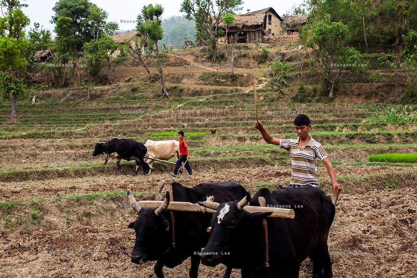 A child works in the paddy fields in the remote village of Dungi Khola, near Chhinchu, Surkhet district, Western Nepal, on 1st July 2012. In Surkhet, Save the Children partners with Safer Society, a local NGO which advocates for child rights and against child marriage. Photo by Suzanne Lee for Save The Children UK