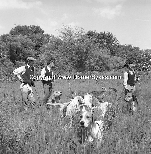 The Valley Minkhounds..Aidan Slatter, huntsman, with his two whips, Michael Riching and Simon Haines, and some of their hounds. Near Aldermaston, Berkshire..Hunting with Hounds / Mansion Editions (isbn 0-9542233-1-4) copyright Homer Sykes. +44 (0) 20-8542-7083. < www.mansioneditions.com >..