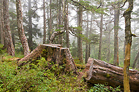 Tongass National Forest, Baranof Island, Sitka, Alaska