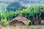 Informal Homestead surrounded by bannana trees on the foothills of Mount Gorongosa, Gorongosa Mountain, Inhambane Province, Mozambique