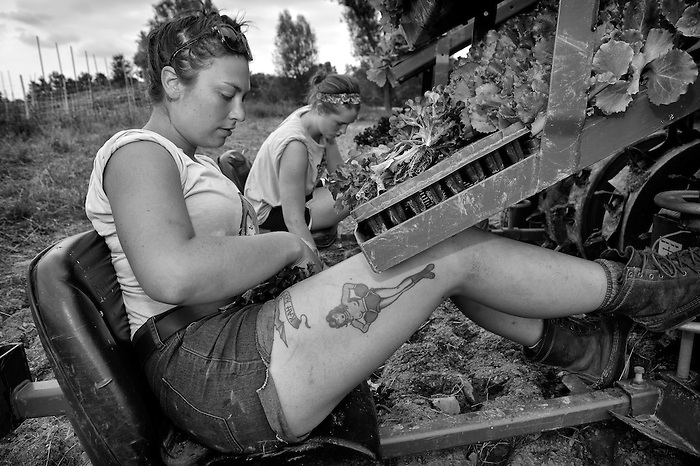 A woman with tattoo's planting lettuce on an organic farm